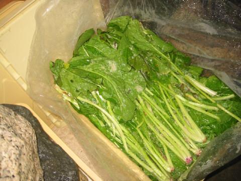 野沢菜を敷き詰める